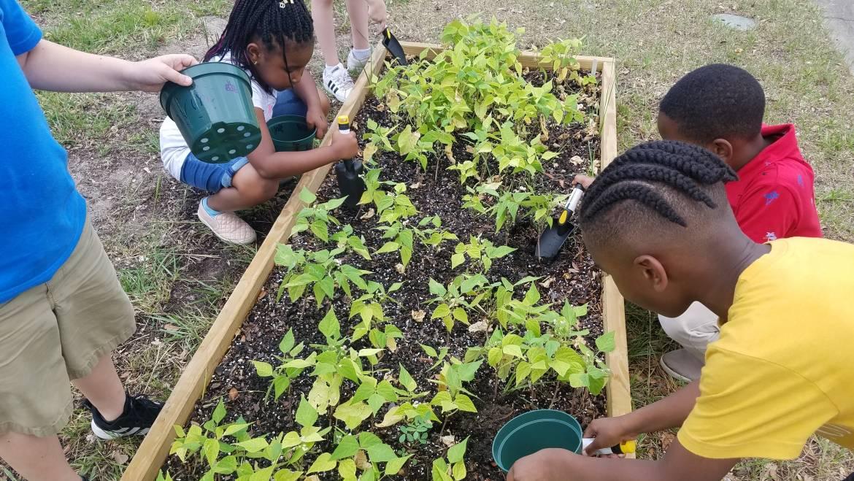 Summer Begins, But the School Garden Doesn't End