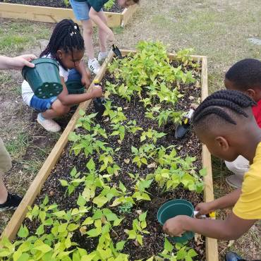 Summer Begins, But the School Garden Doesn't End